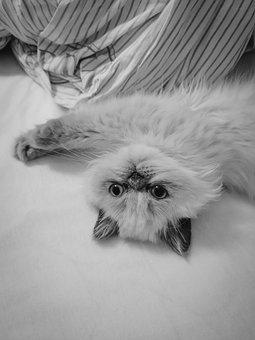 Cat, Kitten, Pet, Feline, Portrait, Kitty, Fur, Furry