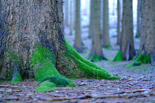 Roots, Moss, Tree, Forest Floor, Forest Ground, Mossy