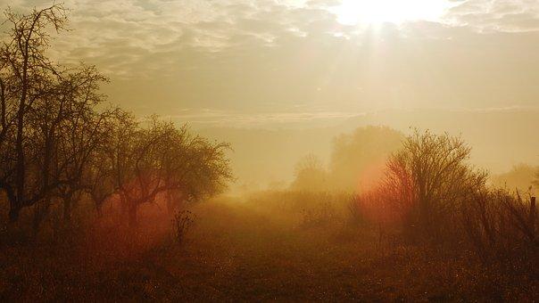 Trees, Meadow, Fog, Path, Golden Hour, Mist, Foggy