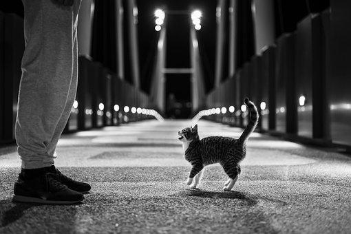 Cat, Kitten, Street, Feline, Mammal, Animal, Pet, Kitty
