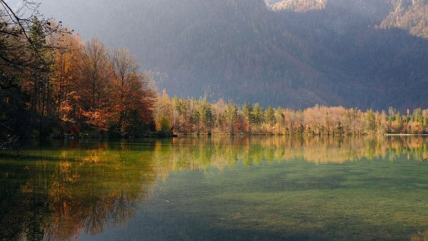 Lake, Forest, Bank, Trees, Reflection, Water Reflection