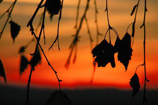 Leaves, Sunset, Silhouette, Shadow, Dusk, Evening