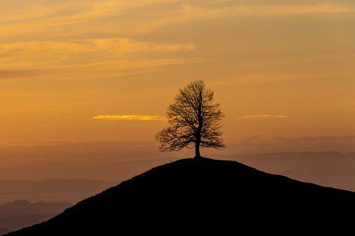 Tree, Hill, Sunset, Silhouettes, Backlighting, Skyscape