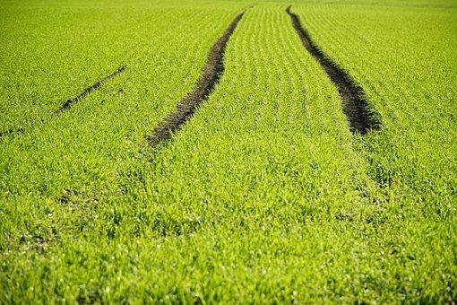Hordeum, Winter Barley, Barley, Agriculture, Field