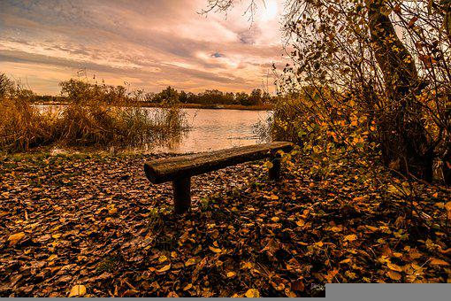 Lake, Bench, Fallen Leaves, Dried Leaves, Water, Bank