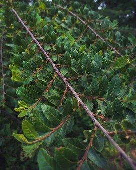 Leaves, Branch, Plant, Foliage, Flora, Nature, Closeup