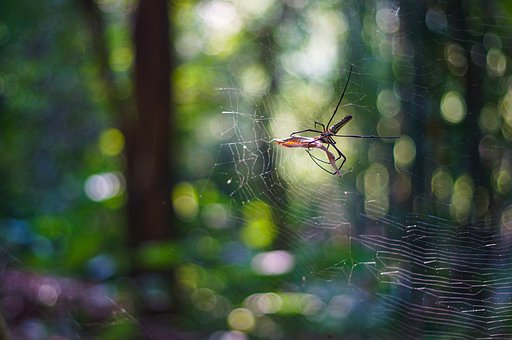 Spider, Dancing With Leaves, Dance With Leaf