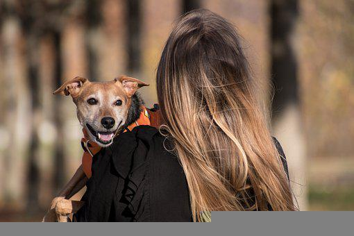 Dog, Pet, Pet Owner, Animal, Domestic Dog, Canine