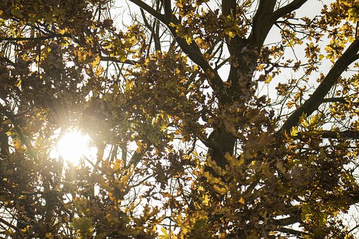 Tree, Branches, Sunlight, Leaves, Foliage, Forest