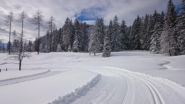 Cross Country Skiing, Austria, Wald, Forest, Nature