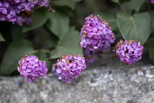 Flowers, Petals, Leaves, Foliage, Bush, Garden, Plant