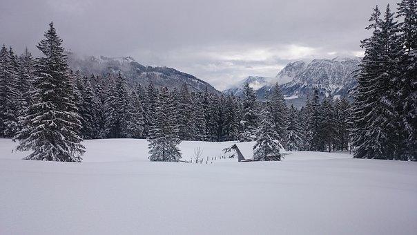 Snow, Landscape, Forest, Trees, Winter, Wintry, Snowy