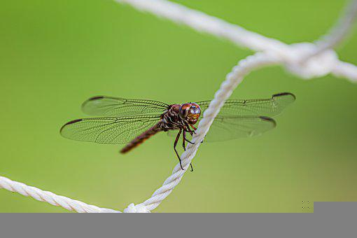 Dragonfly, Insect, Wings, Dragonfly Wings