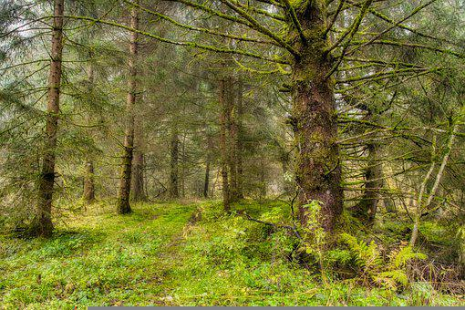 Forest, Trees, Mist, Fog, Morning, Woods, Woodland