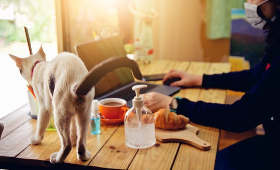 Cat, Table, Work, Pet, Animal, Feline, Mammal, Busy