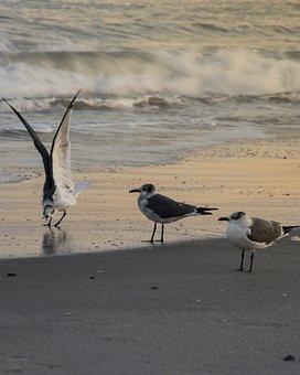 Gulls, Birds, Beach, Seagulls, Animals, Seabirds, Coast