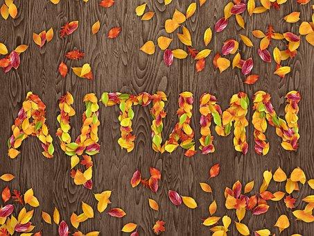 Autumn, Fall, Leaves, Wood, Nature, Seasonal