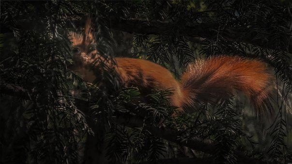 Oachkatzelschwoaf, Squirrel, Hidden, Light