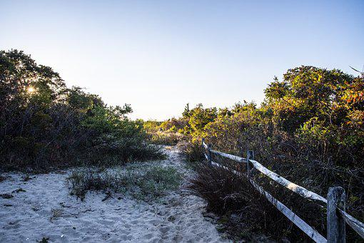 Coast, Plants, Trail, Sand, Bushes, Shrubs, Path