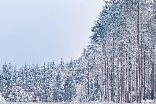 Snow, Trees, Field, Meadow, Cold, Winter, Snowy, Wintry