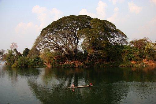 Tree, Jungle, Don Det, Tourism, Asia, Boat, Mekong