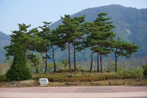Park, Chuncheon, Nami, Jaraseom, Korea