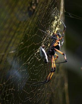 Spider, Cobweb, Nature, Web, Close Up, Insect, Animals
