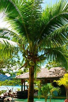 Coconut Tree, Palm, Tropical, Coconut, Tree, Summer