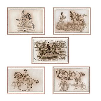 Horse, Riding, Equestrian, Woman, Lady, Equine