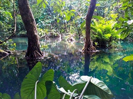 Jungle, Laos, Luang Prabang, Mangroves, Tad Kuang Xi