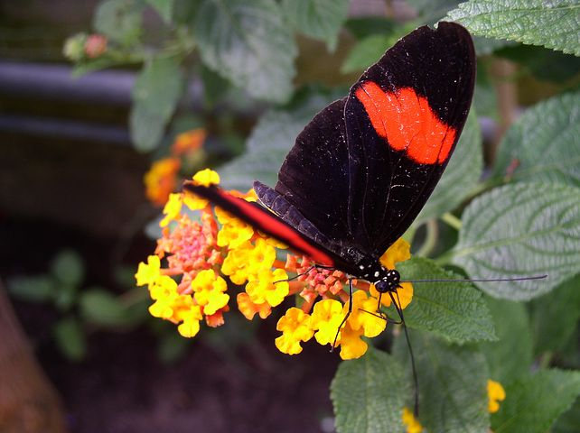 Butterfly, Maximilian Park, Hamm, Ruhr Area, More