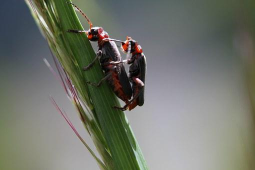 Beetle, Pairing, Green, Insect, Close Up, Nature