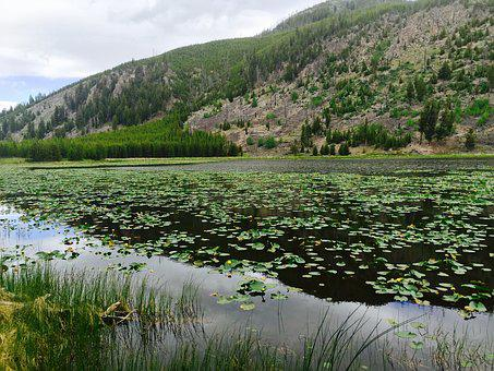 Yellowstone, National, Park, Wyoming, Usa, Landscape