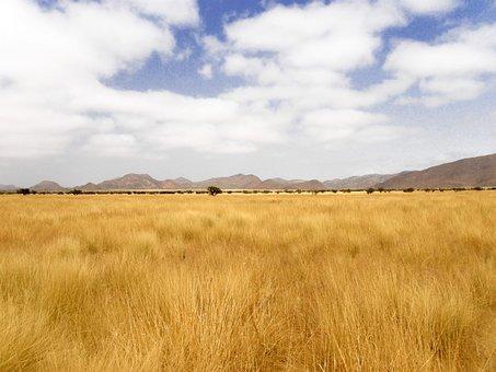 Grass, Yellow Grass, Dry Grass, Expanse, Stark