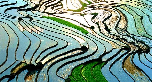 Lao Cai, Terraces, Green, Sunlight, Sapa, Vietnam