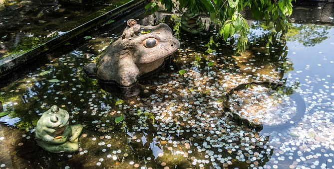 Pond, Money, Make Wish, Water, Nature, Luck, Outdoor