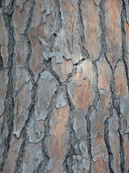 Pine, Bark, Tribe, Background, Structure, Texture, Wood