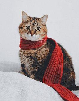 Cat, Scarf, Tabby, Warm, Portrait, Cat Portrait
