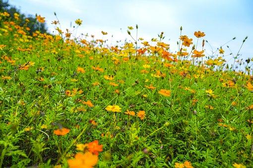 Autumn, Chung Yeung Festival, Flowers, Yellow Flower