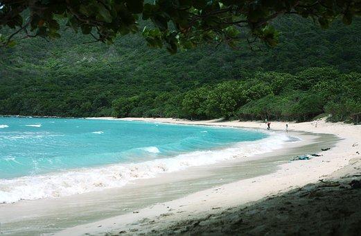 Beach, Coast, Sea, Waves, Sand, Shore, Seashore, Trees