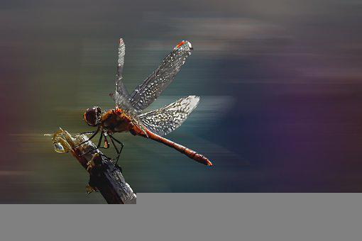Dragonfly, Insect, Flight, Moving, Wings, Entomology