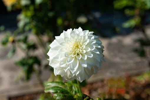 Flowers, White, Mohan, Nannapaneni, Romantic, Lovely