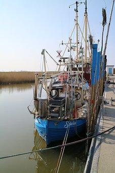 Cutter, Crabs, Coast, Shrimp, Sea