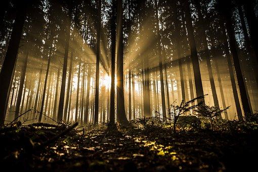 Forest, Trees, Sunlight, Silhouette, Sunrays, Sunrise