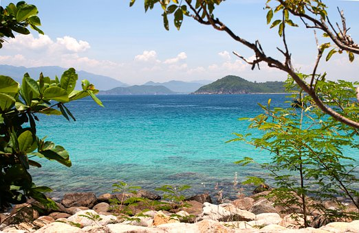 Coast, Trees, Sea, Rocks, Shore, Seashore, Stones