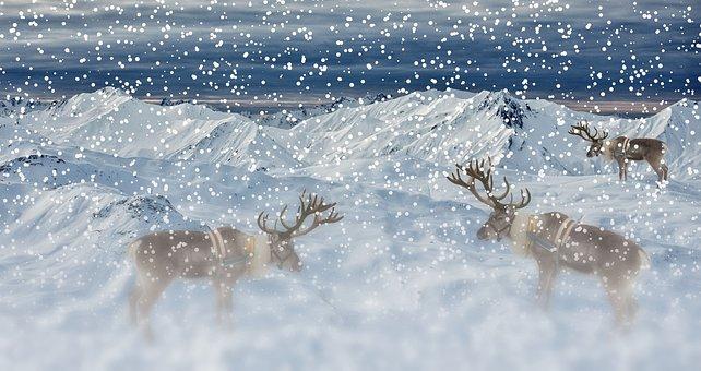 Snow, Reindeers, Winter, Mountains, Snowfall, Hoarfrost