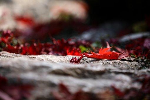 Leaves, Maple, Maple Leaf, Wood