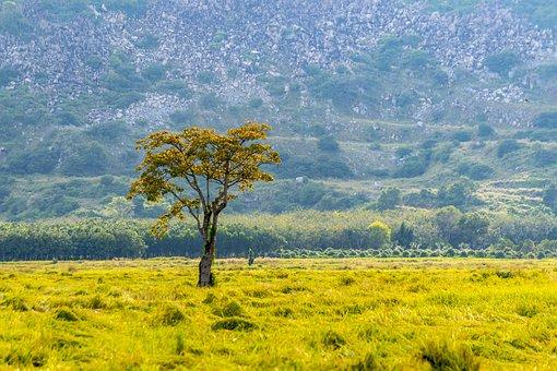 Field, Tree, Mountain, Farm, Rice Farm, Farmland