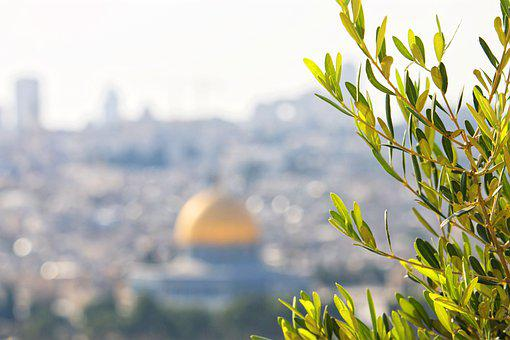 Jerusalem, Olive Tree, Israel, Holy, Mediterranean