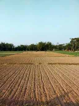 Field, Meadow, Agriculture, Village, Farm